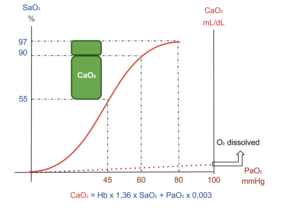 Influence of PaO<sub>2</sub>, SaO<sub>2</sub> and dissociation curve on CaO<sub>2</sub>. Increase of PaO<sub>2</sub> above 60-80mmHg has little influence on CaO<sub>2</sub>.